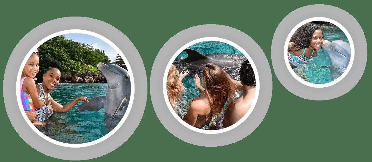 Verschillende toeristen genieten van hun dolfijn ontmoeting bij de Dolphin Academy Curaçao.