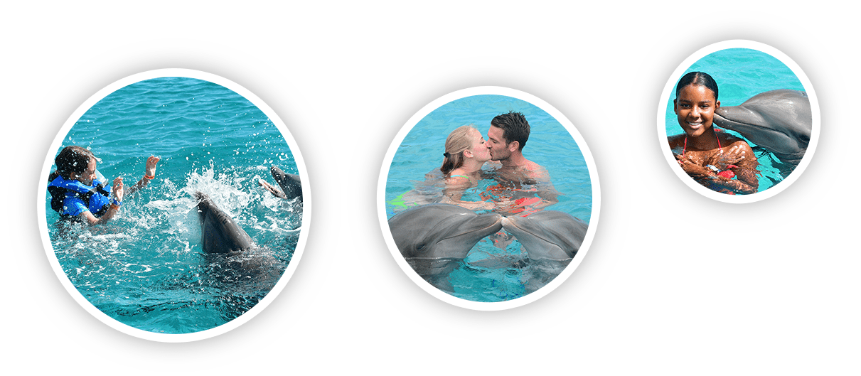 Toeristen van verschillende leeftijden genieten van hun dolfijn ontmoeting bij de Dolphin Academy Curaçao.
