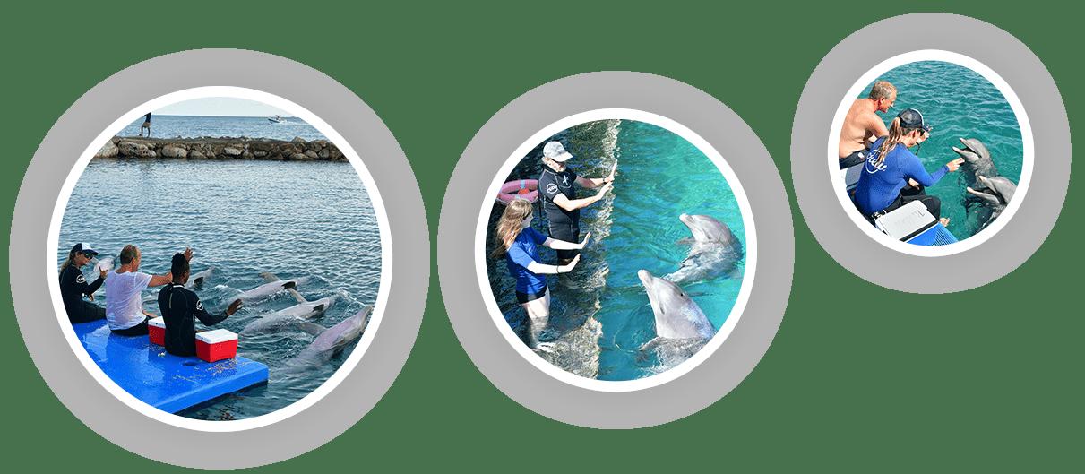 Bezoekers die een verdiepende dolfijncursus volgen bij de Dolphin Academy Curaçao.