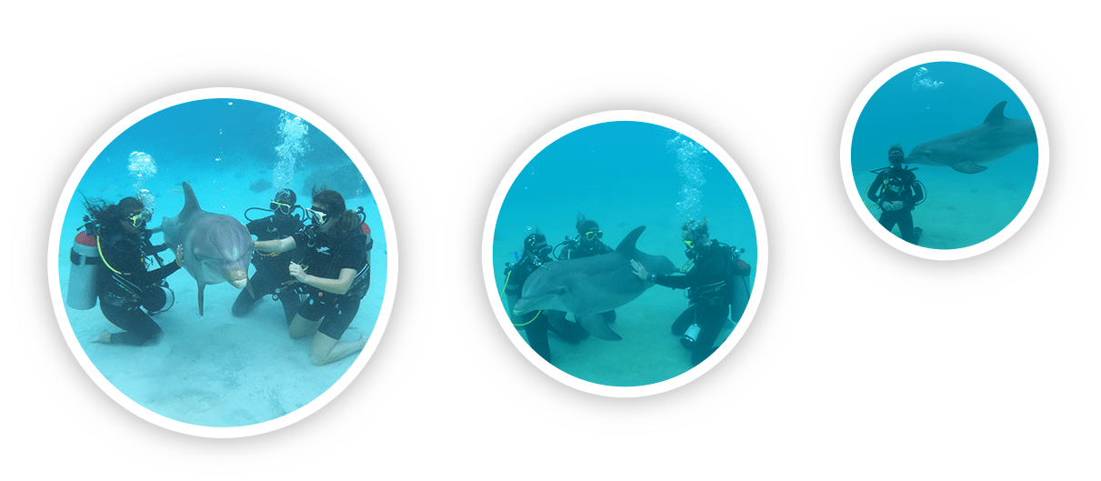 Tourist experiencing a dolphin scuba encounter at the Dolphin Academy Curaçao.