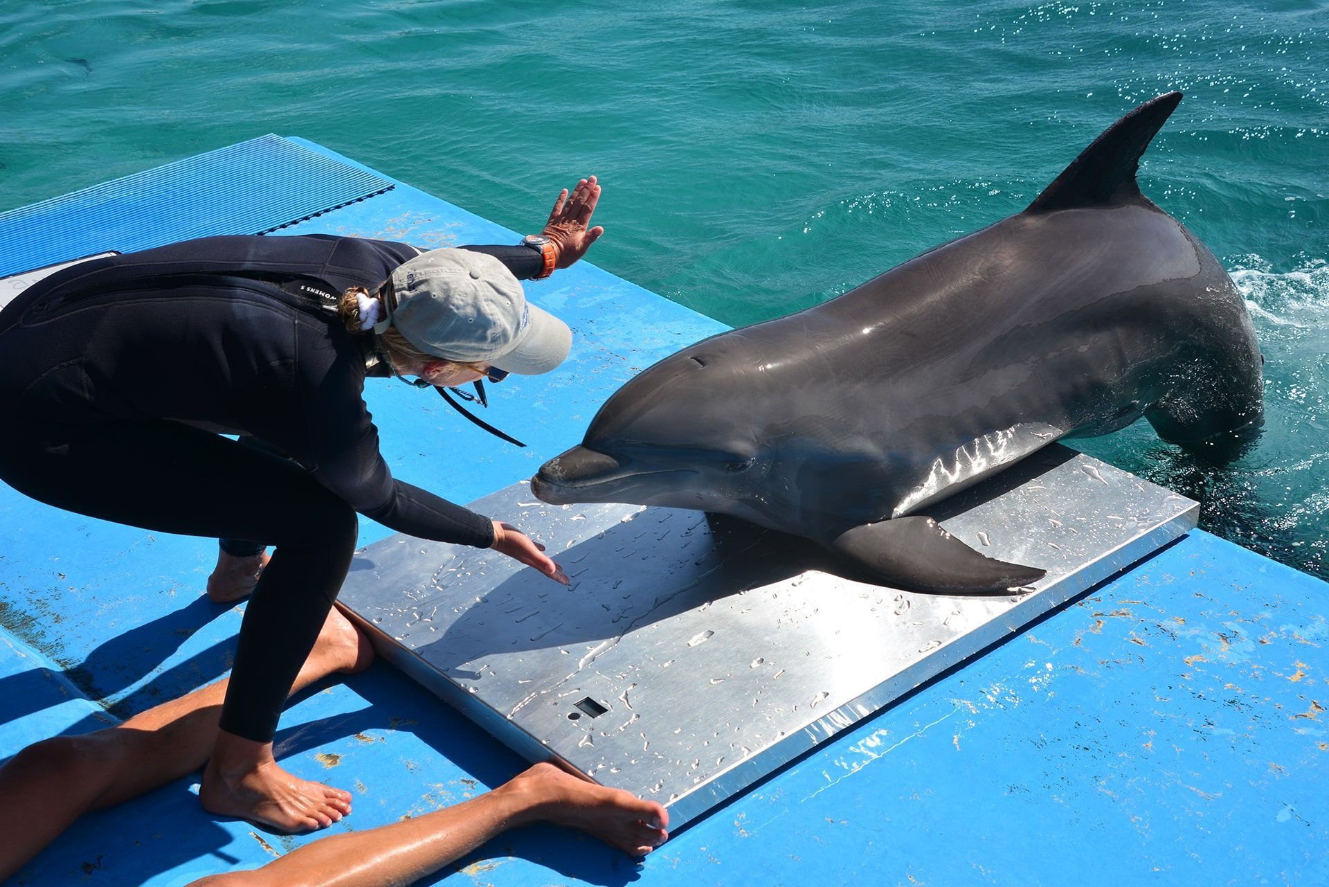 A trainer at the dolphin academy in Curaçao training the dolphin.