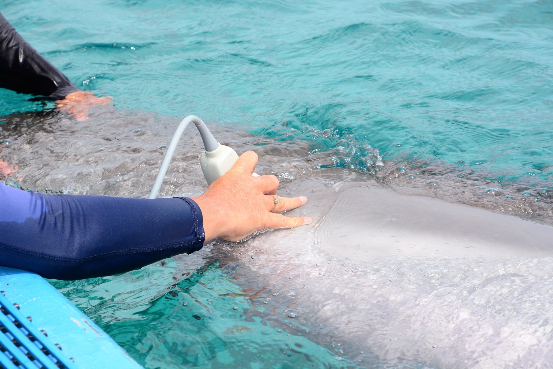 A dolphin at the dolphin academy in Curaçao receiving the best health care.