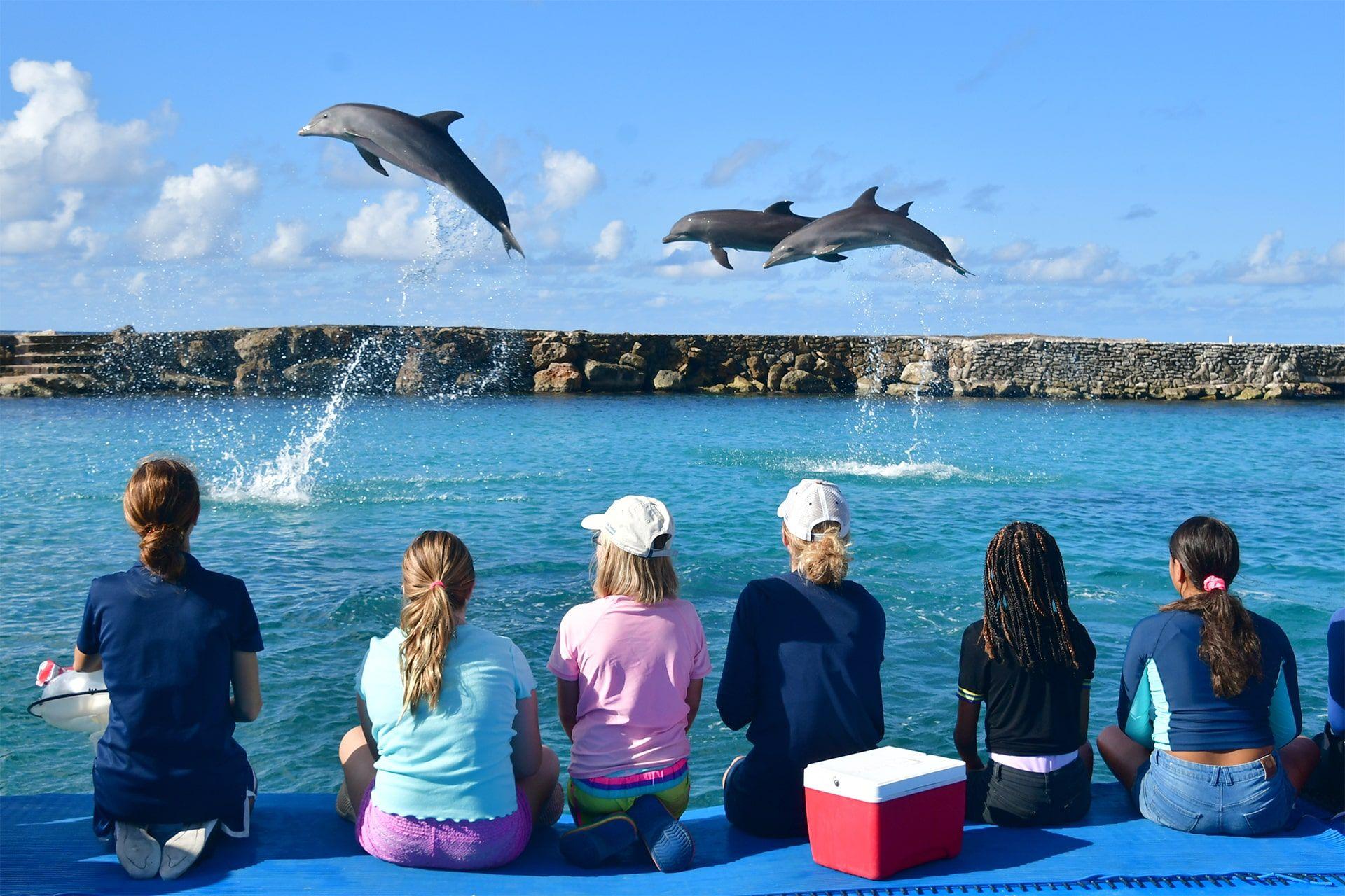 Los niños disfrutan de las actividades de la academia de delfines.