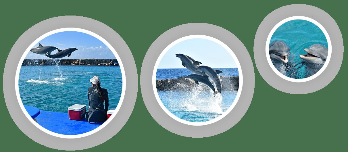 Bij Dolphin Academy werken we eraan om de dolfijnen een natuurlijke habitat te bieden.