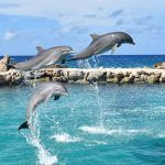 Three dolphins jumping out of the water.