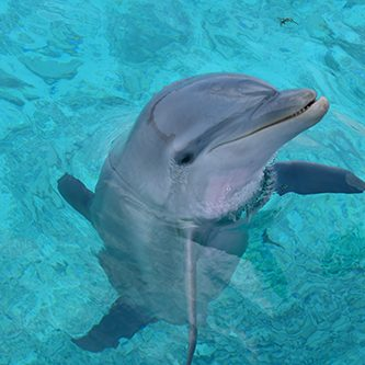 Meet Luna the dolphin at the Dolphin Academy in Curaçao.