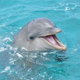 Meet Mosa the dolphin at the Dolphin Academy in Curaçao.