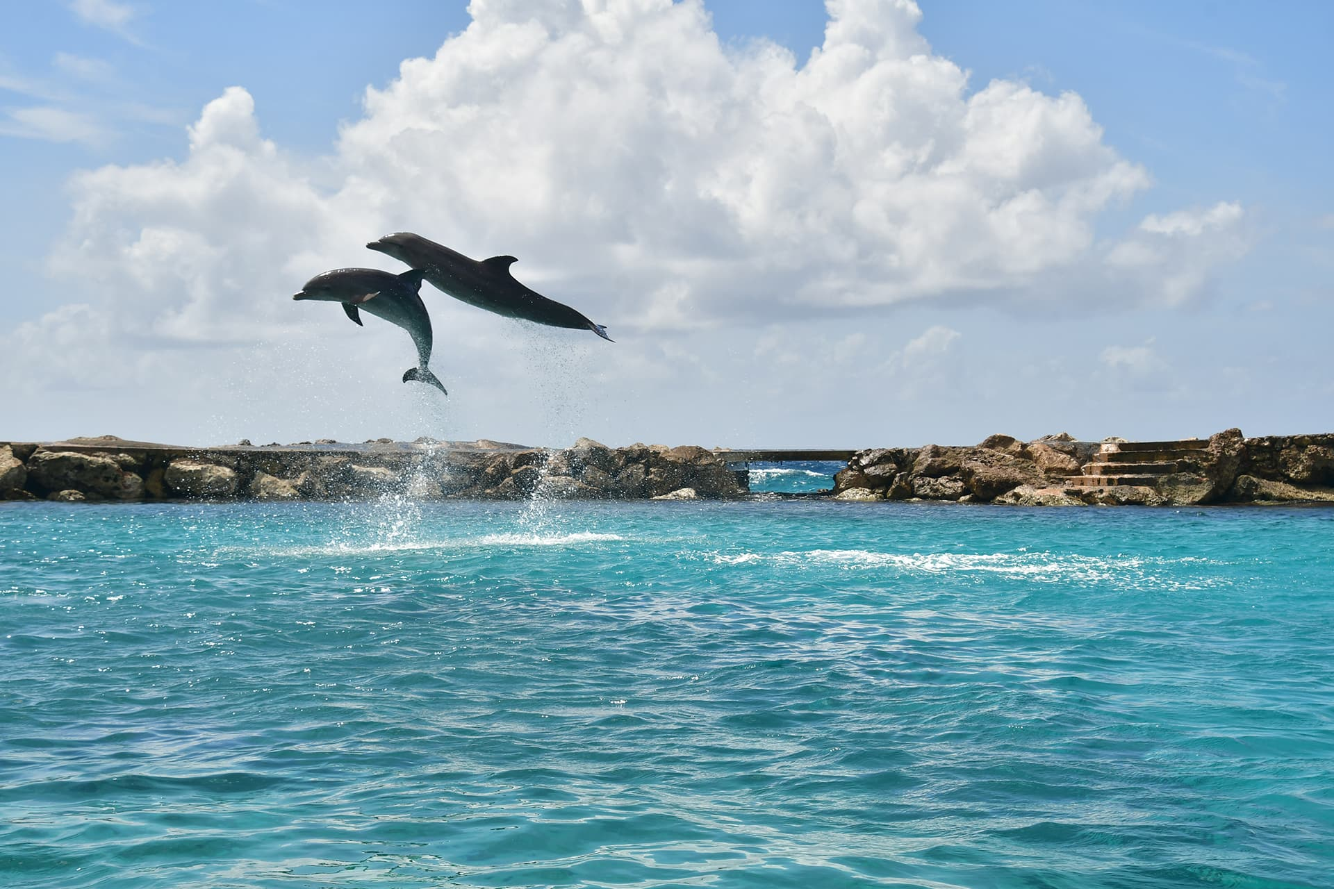 Two dolphins jumping extremely high out of the sea.