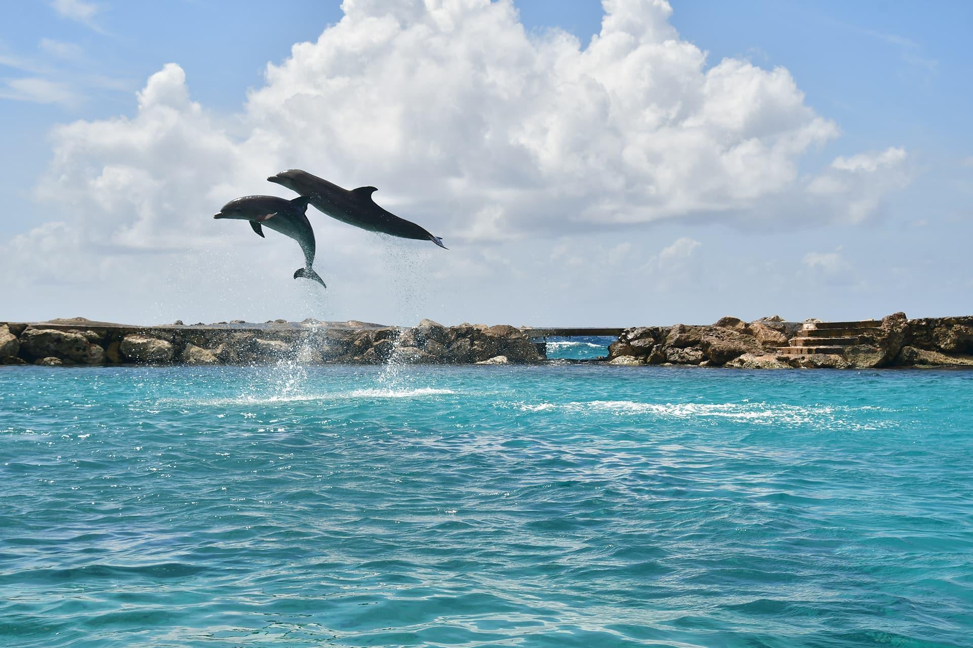 Twee dolfijnen springen extreem hoog uit de zee.