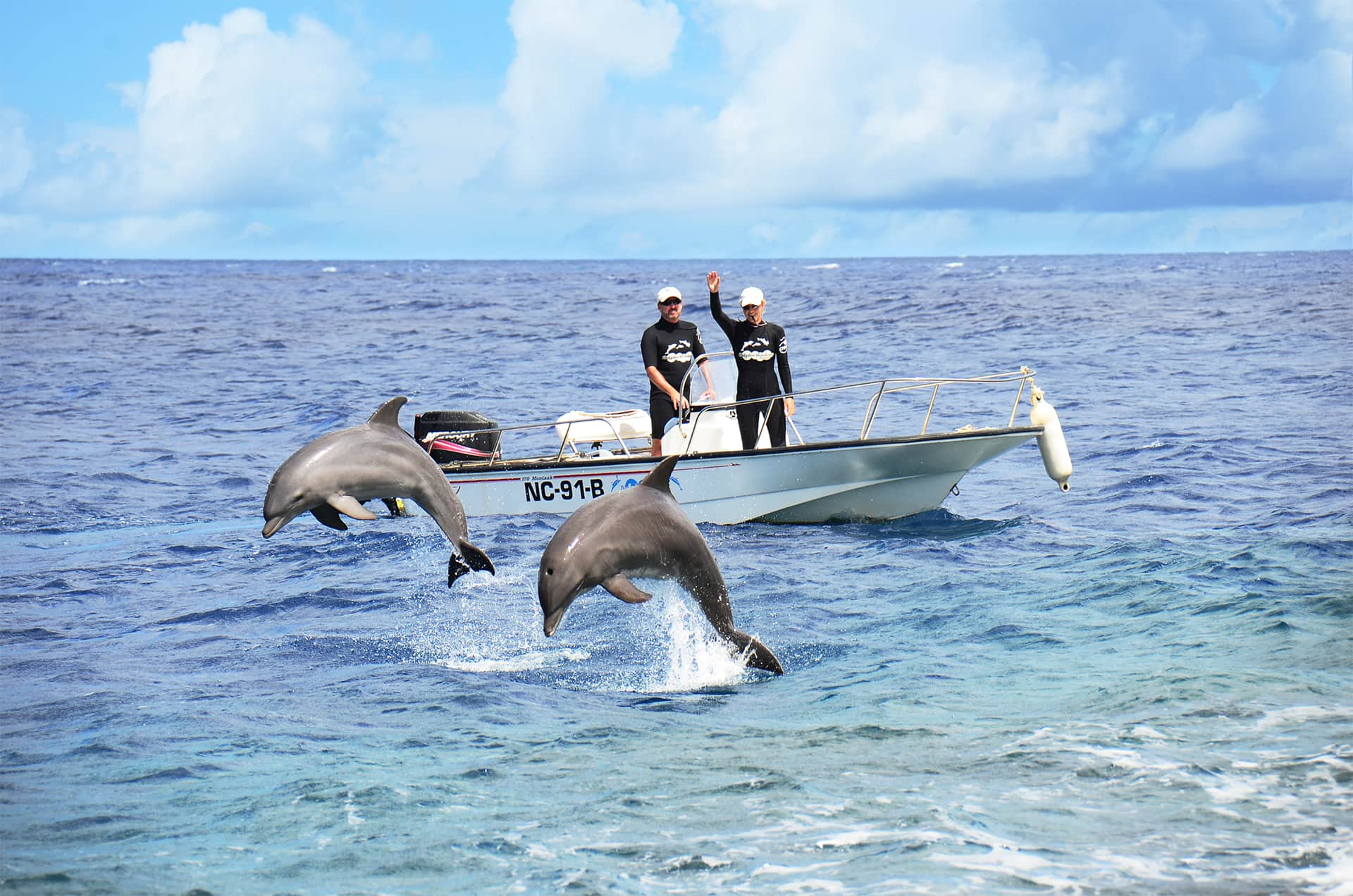 Dolphins receiving training on the open waters of Curaçao.