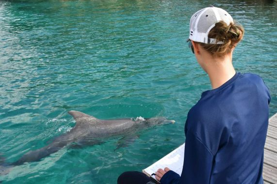Sensory responsiveness of resting dolphins