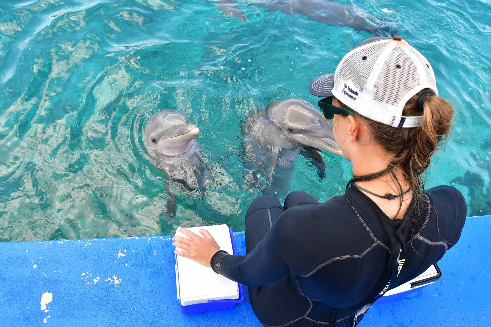 Trainer watching over two dolphins at the dolphin academy in Curaçao.
