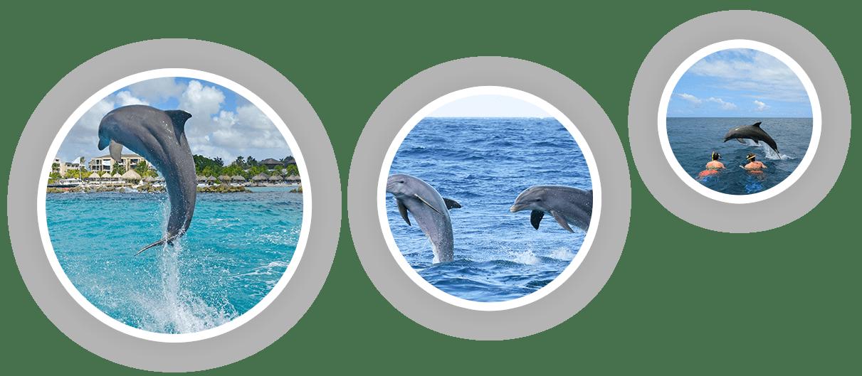 Dolphin Academy werkt met getrainde dolfijnen in open zee.